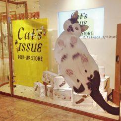 Cat's ISSUE ウラネコ