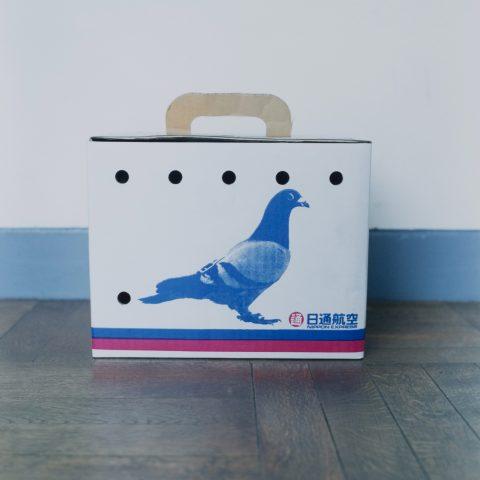 Pigeon Race